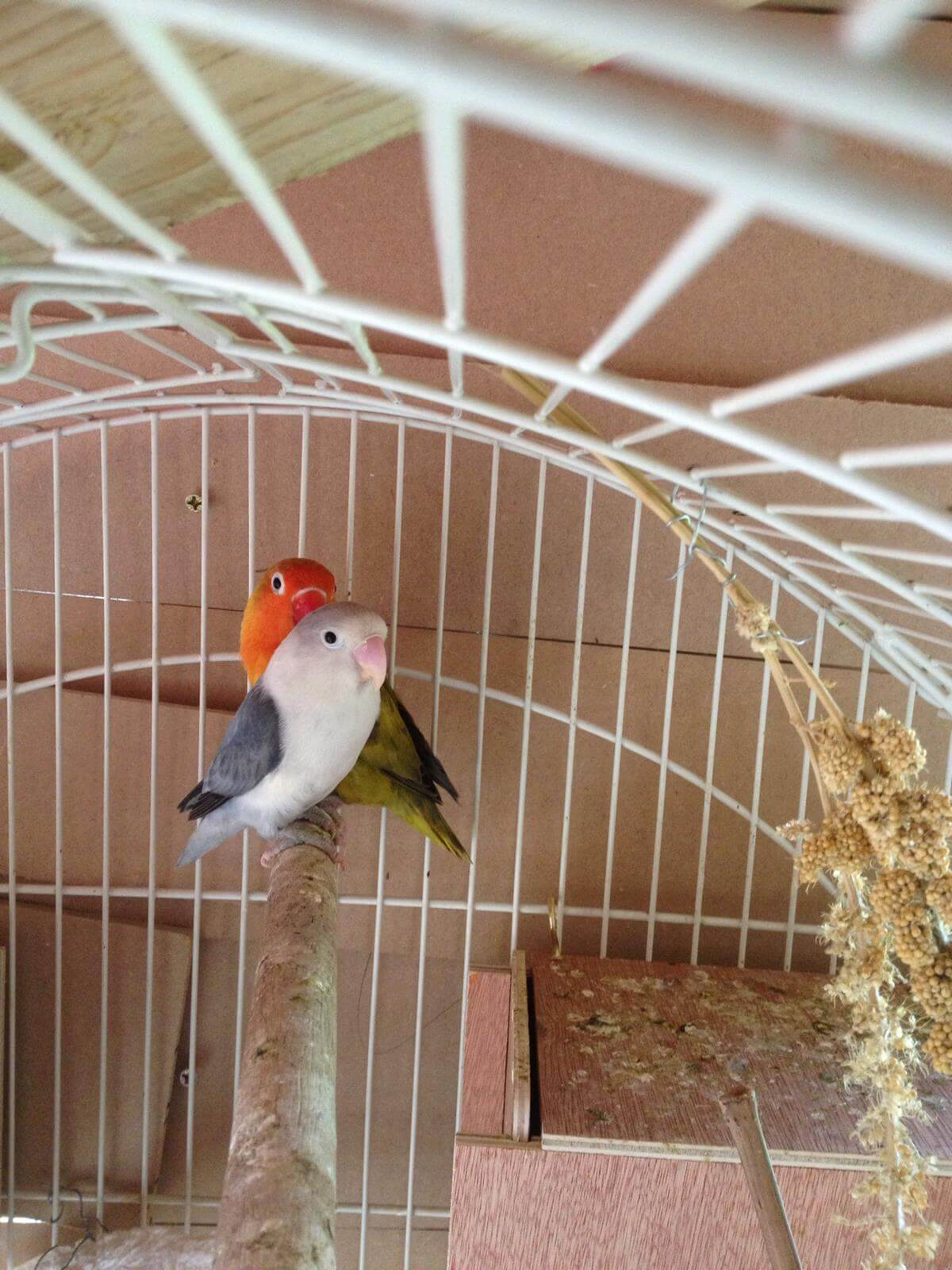 How to provide your birds with a clean, sheltered and parasite free environment…
